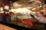 水槽には新鮮な魚が泳いでおります!
