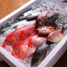 駿河湾の鮮魚!沼津港より毎日直送!!