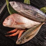 ■その日獲れたばかりの新鮮な魚■【新潟県】