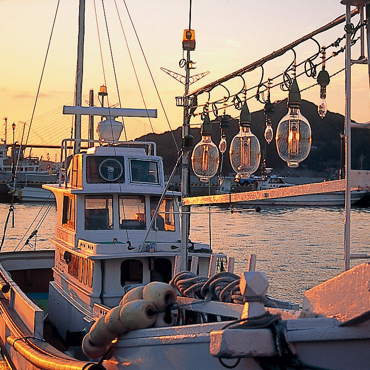 毎朝、市場から仕入れた活きの良い旬の魚介類をご提供!