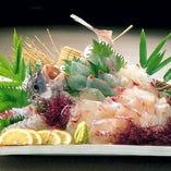 九州産 活真鯛