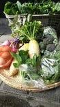 新鮮野菜【神奈川県】