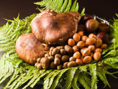 上質な季節食材