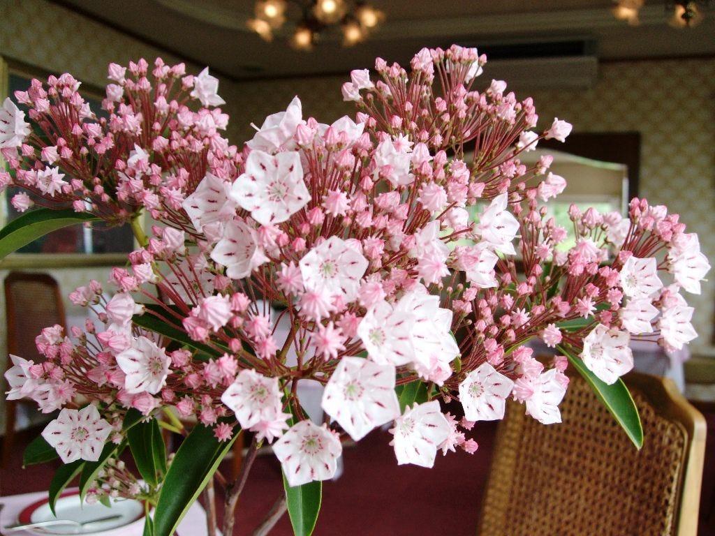 四季折々の庭の花が、テーブルを飾ります