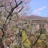 梅の咲くころ