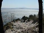 桜と春の海