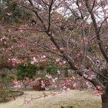 四季折々の花が咲く2000坪の空間、ゆったりと特別な時間を過ごしていただくために、季節の風情を楽しんでいただくためにご用意しました。