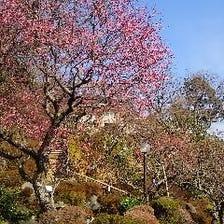 ●花と緑の2000坪の豊かな自然