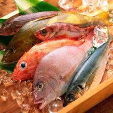 日本近海にて育まれた新鮮な朝〆鮮魚