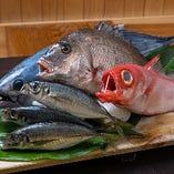 静岡市の前浜(駿河区石部~清水区蒲原)のしずまえ鮮魚
