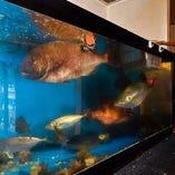 生簀にはその時期旬の魚が沢山