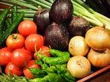 賀茂茄子や賀茂トマトなど夏野菜【京都市上賀茂地区】