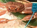 金沢に来たらやっぱり食べたいッ!加能ガニ!(予約制)