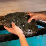 生簀からあげた魚をその場で経験豊富な寿司職人が捌きます!