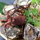 伊勢海老、岩牡蠣、あわび、サザエ等…生け簀からあげたてを調理