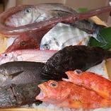 市場直送鮮魚が味わえます