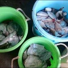 大津港水揚げを直接買付 魚が新鮮!