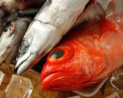 白金魚 KAPPO