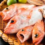 ◎新鮮な鮮魚◎ その日仕入れた旬な新鮮な魚を提供致します!