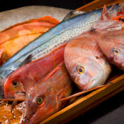 ▼日本海産、直送鮮魚!