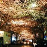 桜の季節にはお花見が出来ます♪