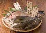 九州産の鮮魚【主に鹿児島県】