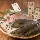 毎日日替わりの九州鮮魚は 当店でしか味わえない!!単品も可