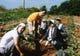 """長野県""""ゆい自然農園""""の高原野菜は、本当に味が濃いんです!!"""