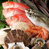 毎日仕入れる、築地直送の新鮮海鮮【豊洲】