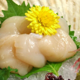 ホタテ貝柱の刺身