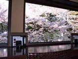 春は満開の桜を目の前に、お食事できます。