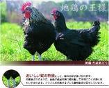 丹波黒鶏【京都府南丹市 園部農場】
