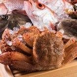 佐渡産紅ずわい蟹