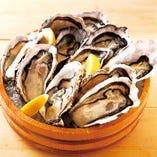 【新鮮そのもの】活〆牡蠣【ニュージーランド産】