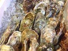 生牡蠣オイスター