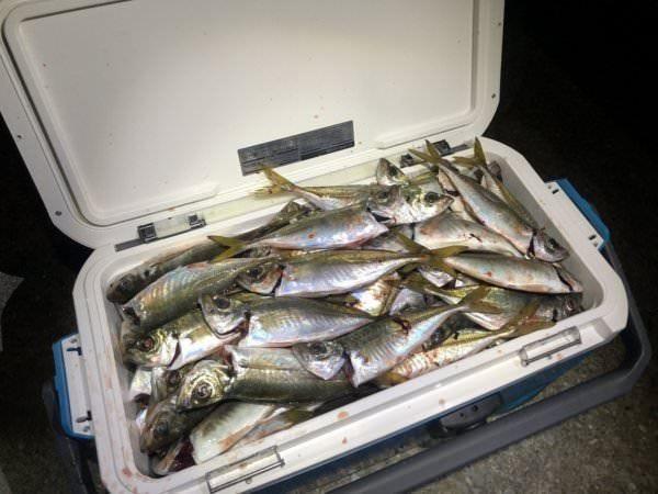 エリア唯一の釣り魚買取してます!
