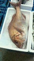日本海地魚グルメ 魚がし
