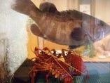 活きたまま届く鮮魚は生簀の中で元気に泳いでます。