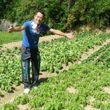 こだわりの13種類の青菜をブレンド致しました!!【和歌山】