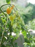 自家菜園のお野菜【岡山県】