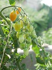岡山の自然の恵みで育った野菜を使用