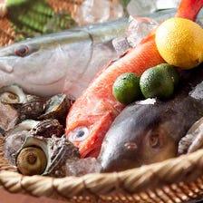 毎日仕入れる新鮮なお魚が絶品!
