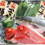 三浦半島より直仕入れの鮮魚【神奈川県三浦市】