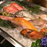 錦江湾で水揚げされた旬の魚【鹿児島県霧島市】