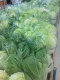 大きな白菜が所狭しと並んでますよ~♪