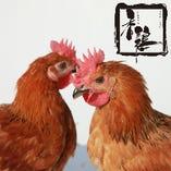 香鶏(かおりどり)【栃木県】