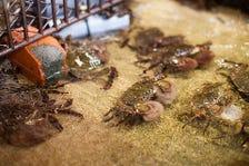 玉島川の恵みと漁師の技