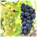 産地直送のワイン【イタリア、フランス、スペイン、ドイツ】