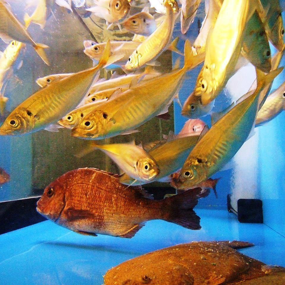 水槽鮮魚 魚の鮮度抜群♪