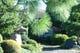 四季折々で趣をかえる庭の木々